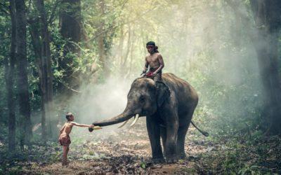 india-2pixabay