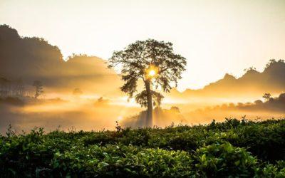 vietnam-3pixabay